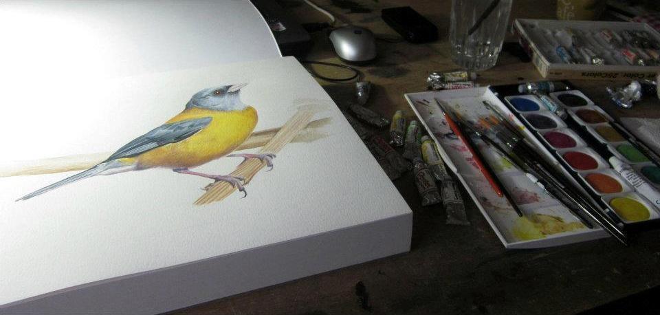 Cometocino en proceso ilustrativo. Lápiz y acuarela sobre papel. Ilustración de Patricia Inda. Foto: Patricia Inda