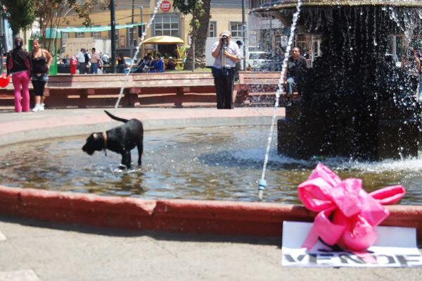 """""""Bueno, bonito, barato"""", intervención urbana de Colectivo Quiltro, Plaza Echaurren, Valparaíso, 14 de febrero de 2011"""